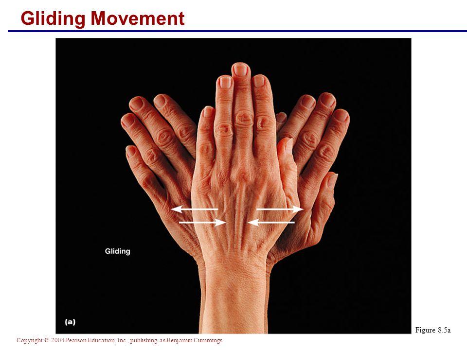 Copyright © 2004 Pearson Education, Inc., publishing as Benjamin Cummings Gliding Movement Figure 8.5a