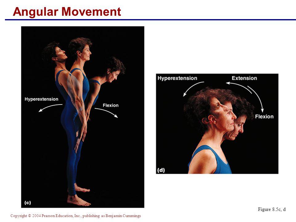 Copyright © 2004 Pearson Education, Inc., publishing as Benjamin Cummings Angular Movement Figure 8.5c, d