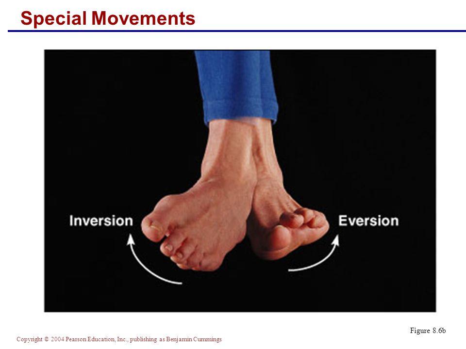 Copyright © 2004 Pearson Education, Inc., publishing as Benjamin Cummings Special Movements Figure 8.6b