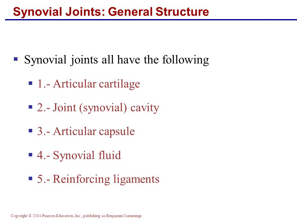 Copyright © 2004 Pearson Education, Inc., publishing as Benjamin Cummings Synovial Joints: General Structure  Synovial joints all have the following  1.- Articular cartilage  2.- Joint (synovial) cavity  3.- Articular capsule  4.- Synovial fluid  5.- Reinforcing ligaments