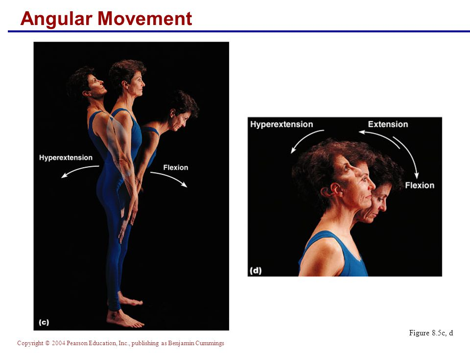 Copyright © 2004 Pearson Education, Inc., publishing as Benjamin Cummings Angular Movement Figure 8.5c, d