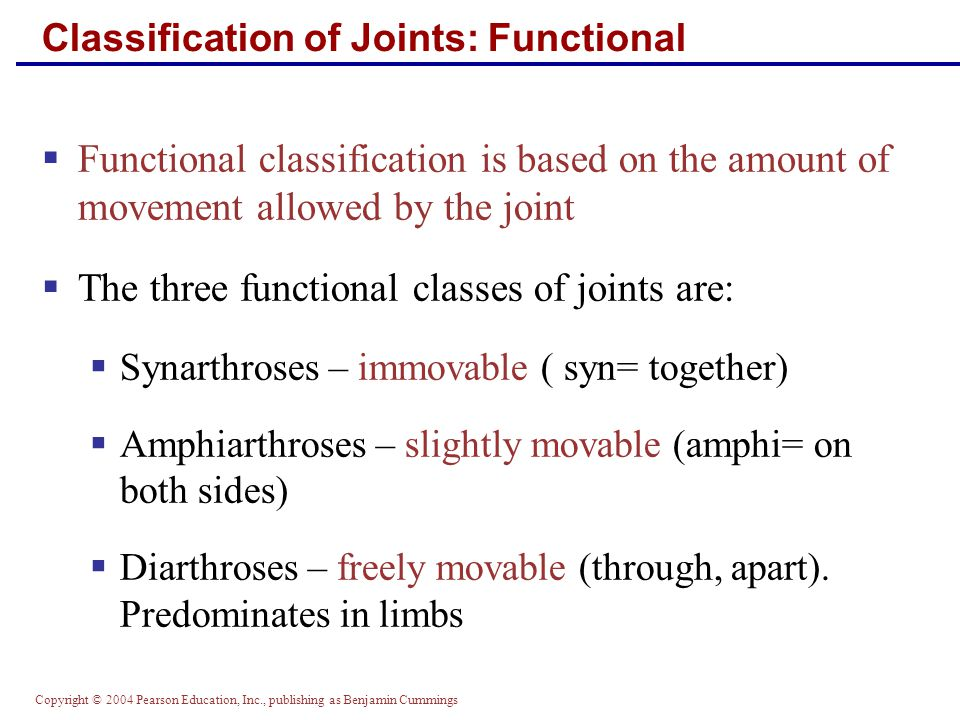 Copyright © 2004 Pearson Education, Inc., publishing as Benjamin Cummings Classification of Joints: Functional  Functional classification is based on the amount of movement allowed by the joint  The three functional classes of joints are:  Synarthroses – immovable ( syn= together)  Amphiarthroses – slightly movable (amphi= on both sides)  Diarthroses – freely movable (through, apart).