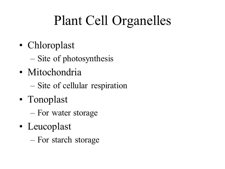 Plant Tissues 3 types Dermal Tissue –Outer covering of the plant –Includes epidermis, cuticle, guard cells Vascular Tissue –All transport systems (xylem and phloem) Ground Tissue –Everything else in the plant –Storage, support, photosynthesis