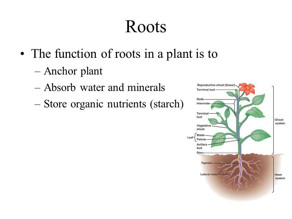 Extreme Plants.