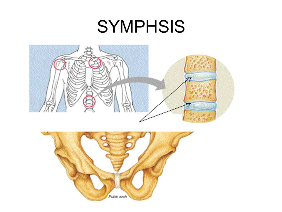 SYMPHSIS