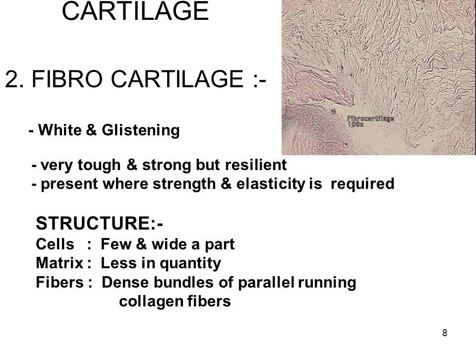 8 CARTILAGE 2.