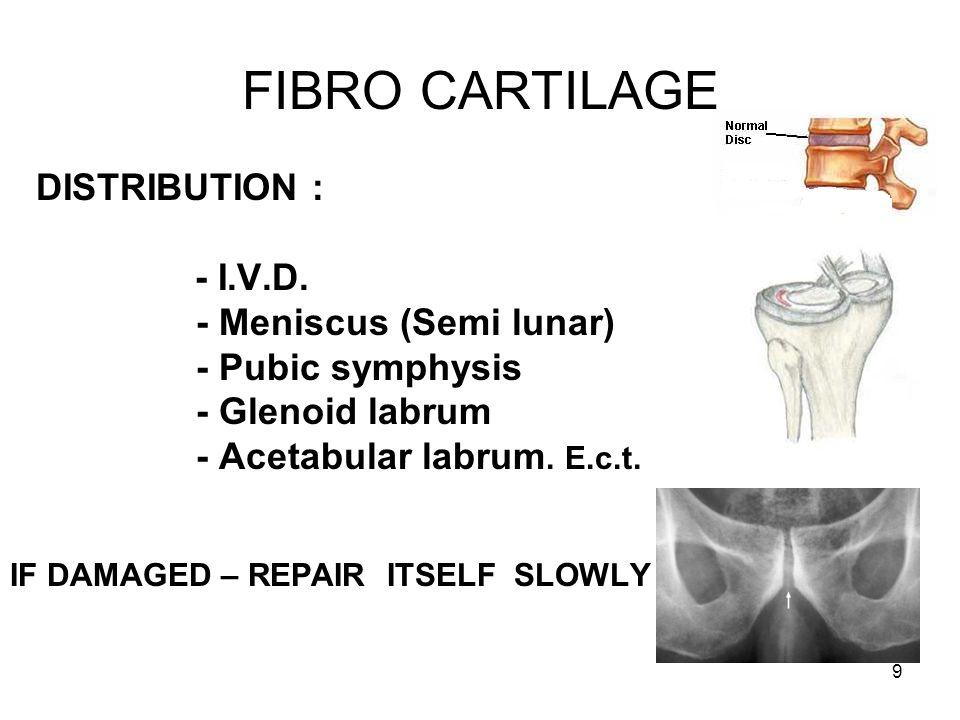 9 FIBRO CARTILAGE DISTRIBUTION : - I.V.D.