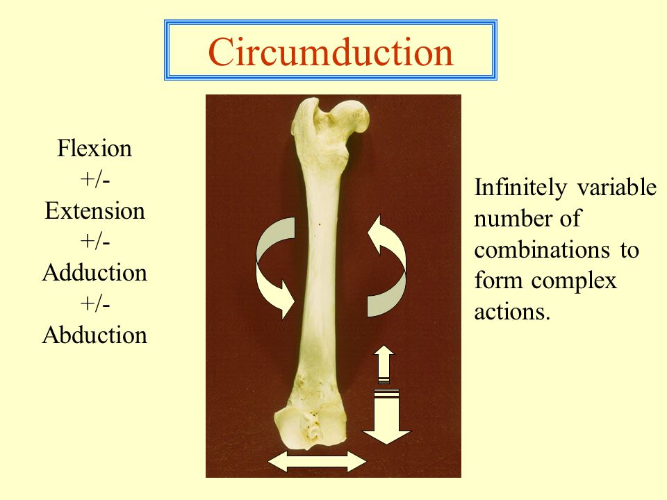 Circumduction Flexion +/- Extension +/- Adduction +/- Abduction Infinitely variable number of combinations to form complex actions.