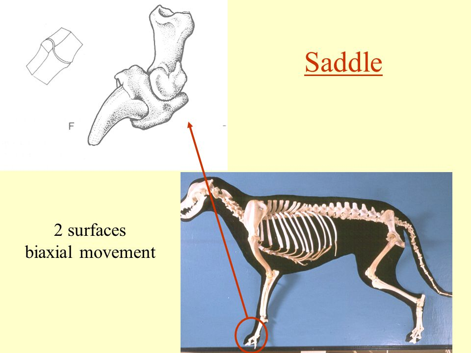Saddle 2 surfaces biaxial movement