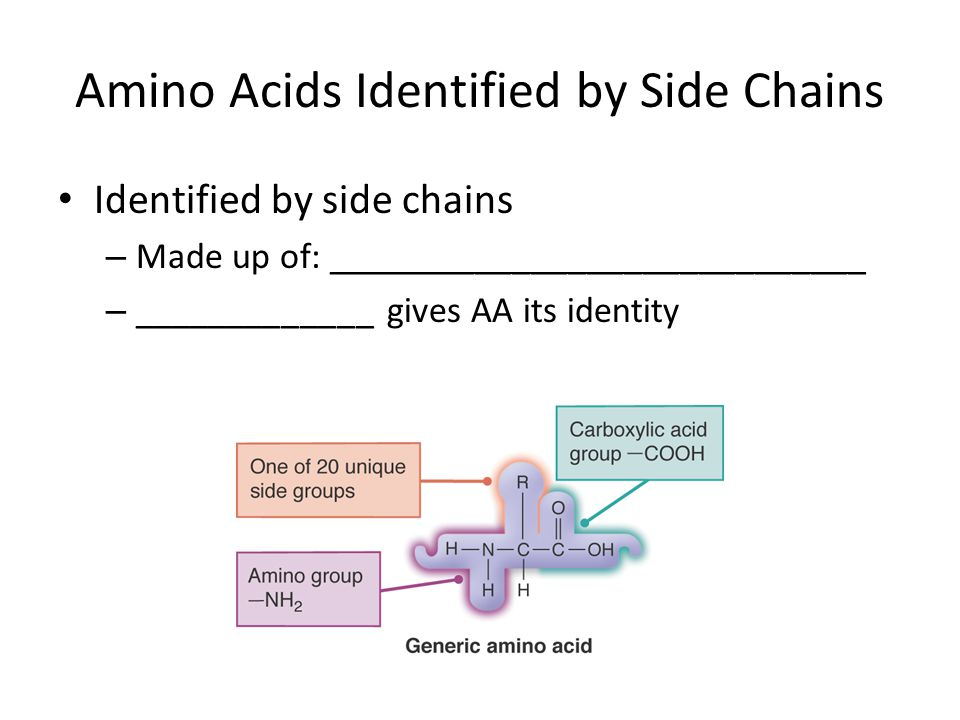 Amino Acids Identified by Side Chains Identified by side chains – Made up of: _____________________________ – _____________ gives AA its identity