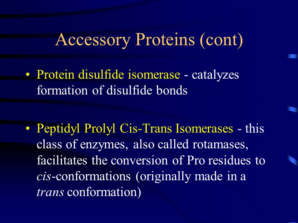 Accessory Proteins (cont) Protein disulfide isomerase - catalyzes formation of disulfide bonds Peptidyl Prolyl Cis-Trans Isomerases - this class of enzymes, also called rotamases, facilitates the conversion of Pro residues to cis-conformations (originally made in a trans conformation)