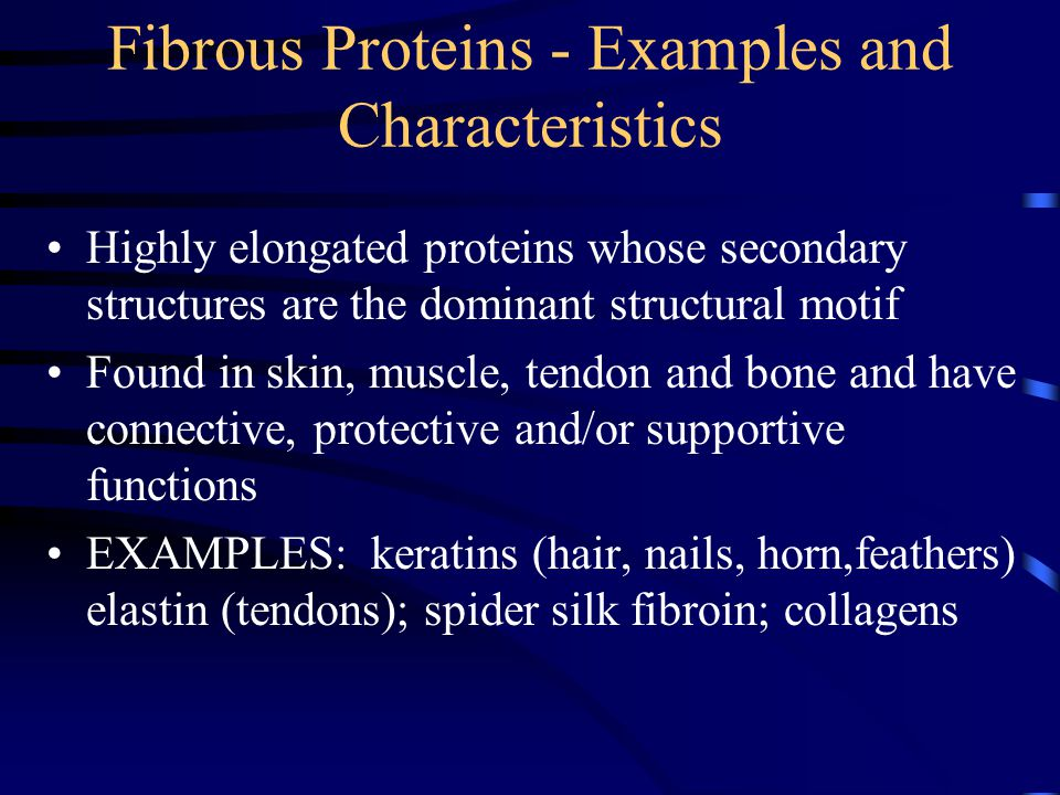 Fibrous Proteins - Examples and Characteristics Highly elongated proteins whose secondary structures are the dominant structural motif Found in skin, muscle, tendon and bone and have connective, protective and/or supportive functions EXAMPLES: keratins (hair, nails, horn,feathers) elastin (tendons); spider silk fibroin; collagens