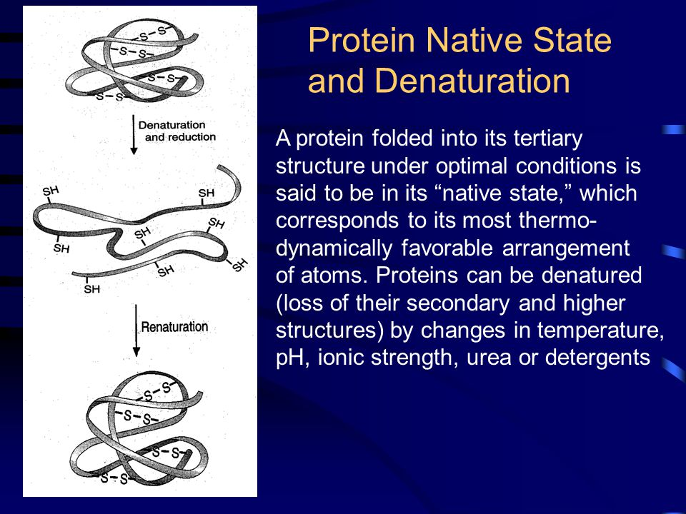 Protein Native State and Denaturation A protein folded into its tertiary structure under optimal conditions is said to be in its native state, which corresponds to its most thermo- dynamically favorable arrangement of atoms.