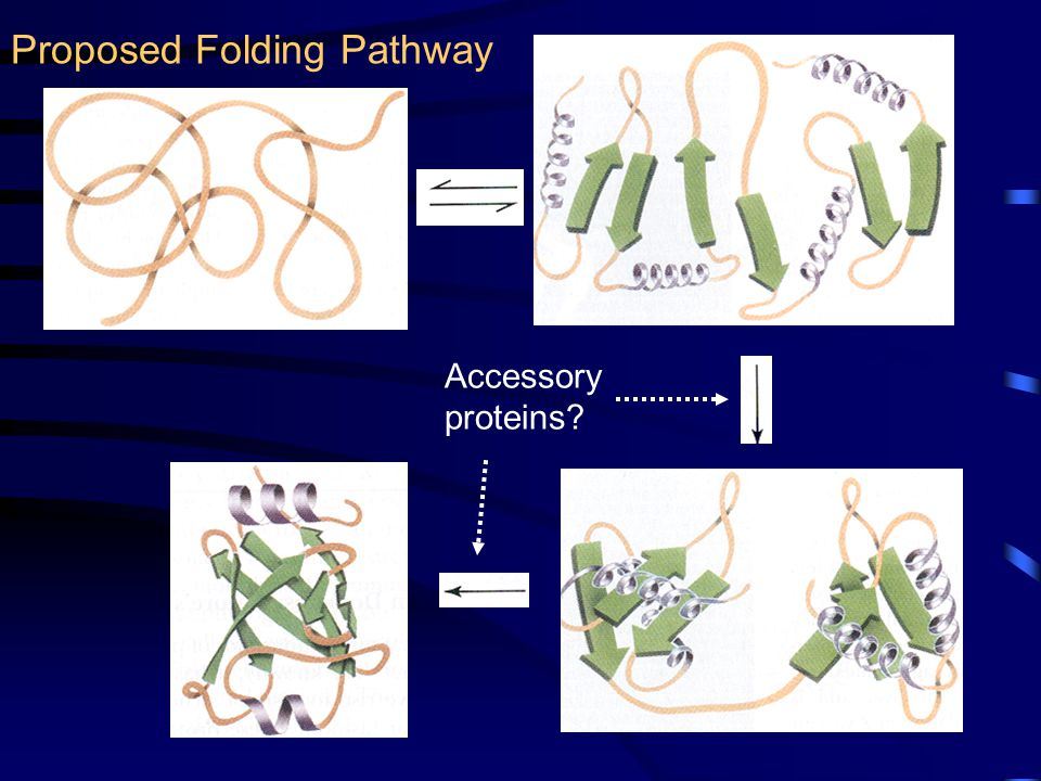 Proposed Folding Pathway Accessory proteins?
