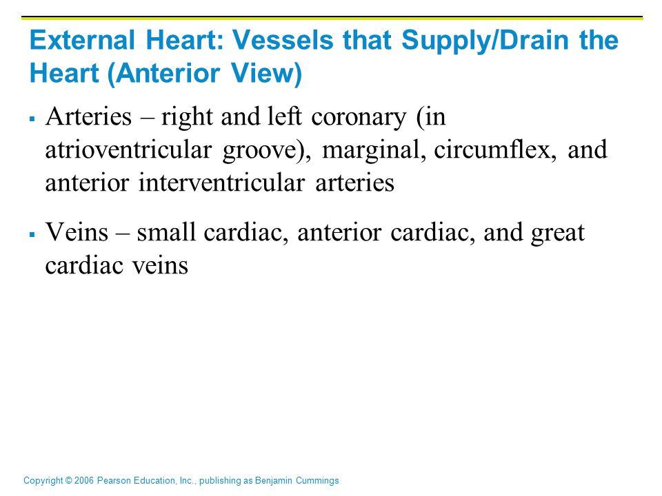 Copyright © 2006 Pearson Education, Inc., publishing as Benjamin Cummings External Heart: Vessels that Supply/Drain the Heart (Anterior View)  Arteri