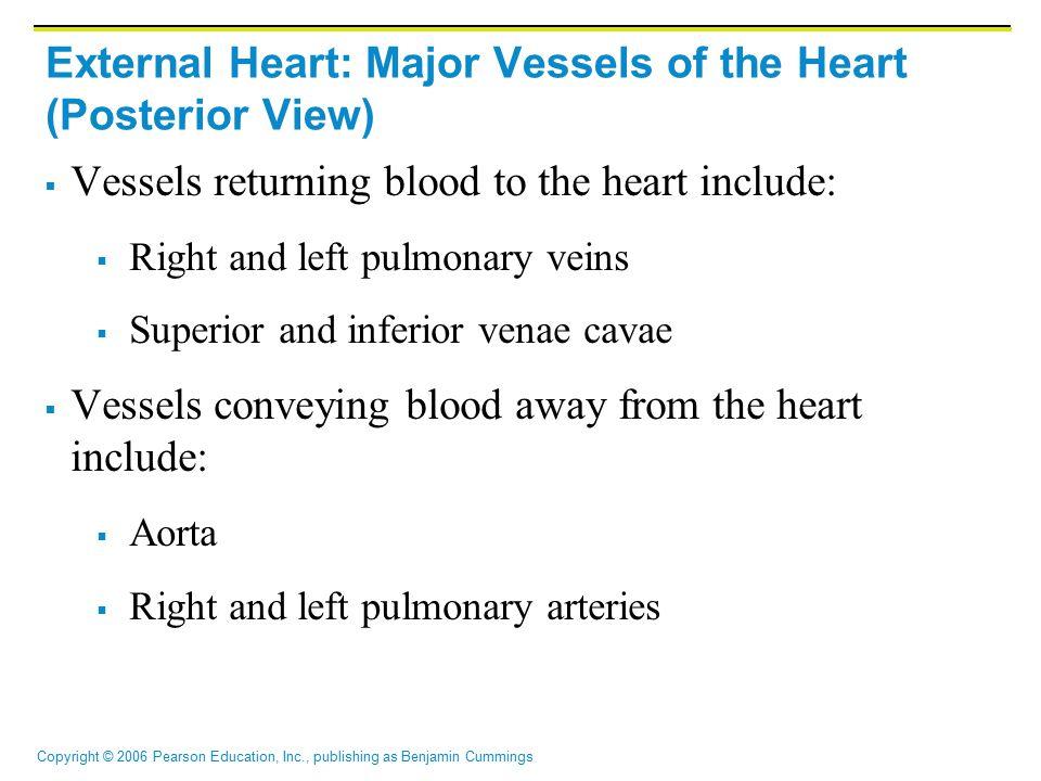 Copyright © 2006 Pearson Education, Inc., publishing as Benjamin Cummings External Heart: Major Vessels of the Heart (Posterior View)  Vessels return