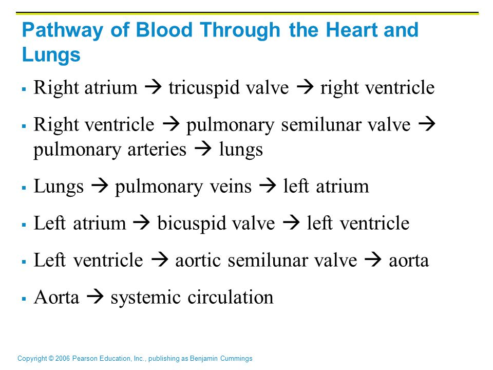 Copyright © 2006 Pearson Education, Inc., publishing as Benjamin Cummings Pathway of Blood Through the Heart and Lungs  Right atrium  tricuspid valv