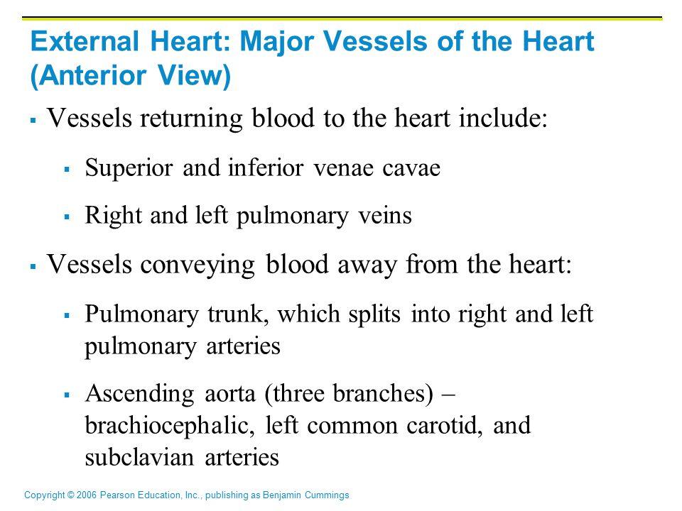 Copyright © 2006 Pearson Education, Inc., publishing as Benjamin Cummings External Heart: Major Vessels of the Heart (Anterior View)  Vessels returni