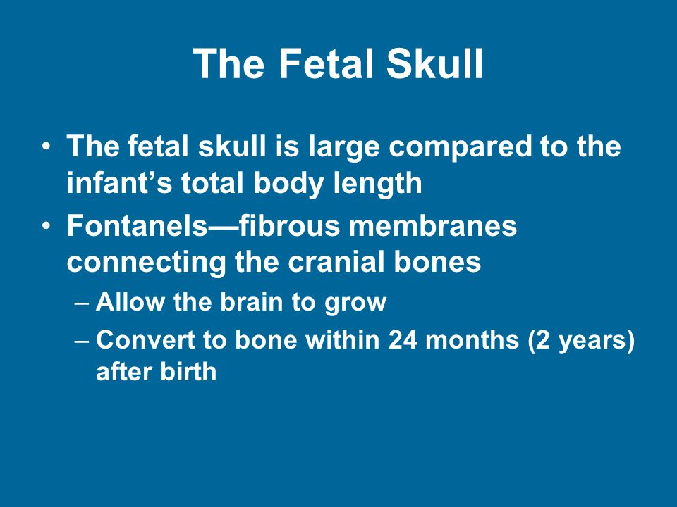 The Fetal Skull The fetal skull is large compared to the infant's total body length Fontanels—fibrous membranes connecting the cranial bones –Allow the brain to grow –Convert to bone within 24 months (2 years) after birth