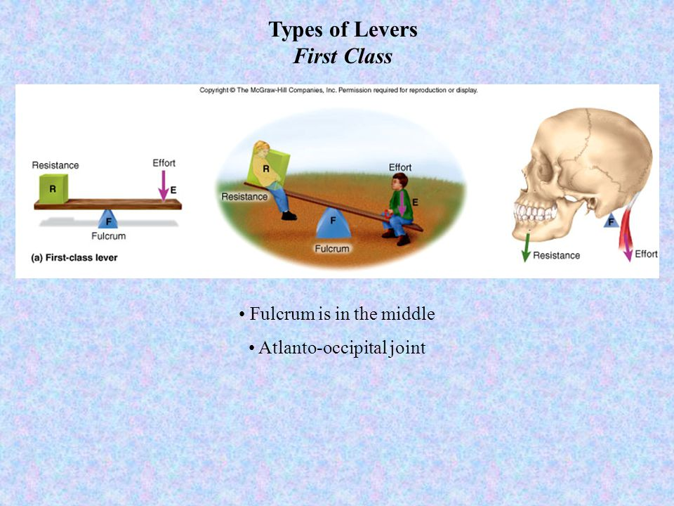 Types of Levers First Class Fulcrum is in the middle Atlanto-occipital joint