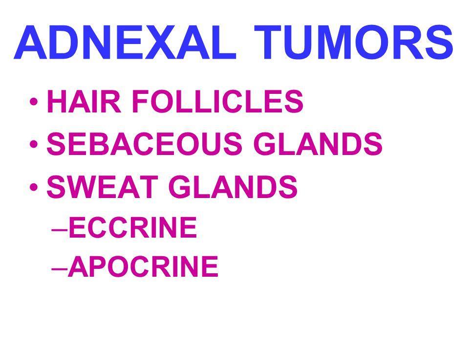 ADNEXAL TUMORS HAIR FOLLICLES SEBACEOUS GLANDS SWEAT GLANDS –ECCRINE –APOCRINE