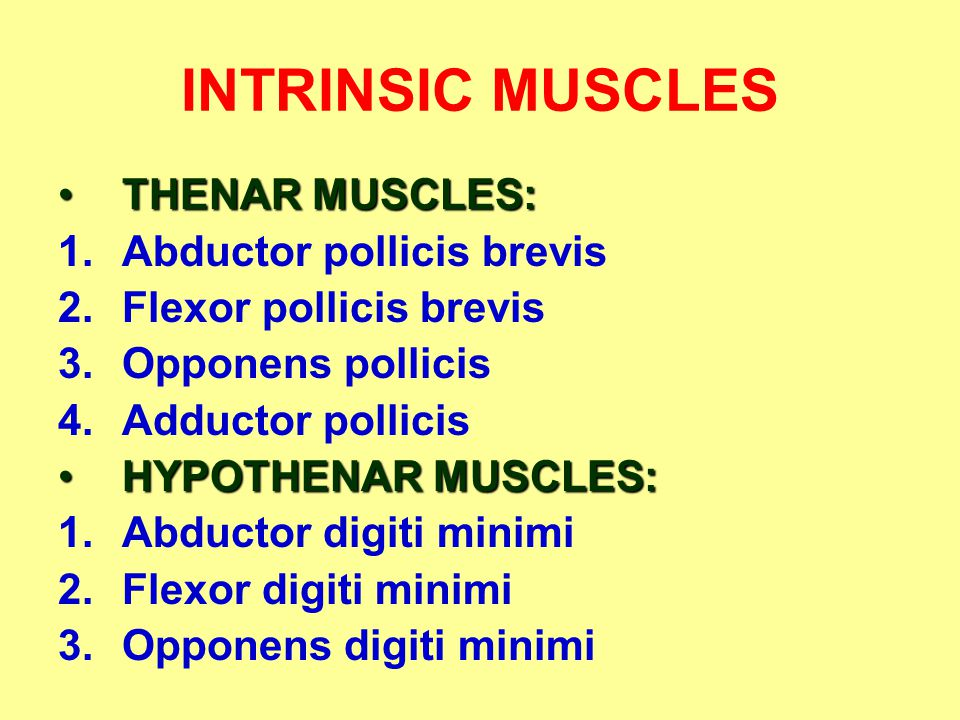INTRINSIC MUSCLES THENAR MUSCLES:THENAR MUSCLES: 1.Abductor pollicis brevis 2.Flexor pollicis brevis 3.Opponens pollicis 4.Adductor pollicis HYPOTHENA