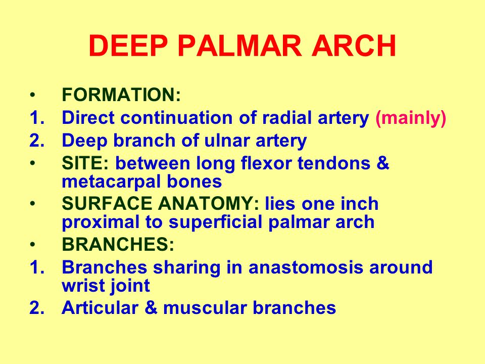 DEEP PALMAR ARCH FORMATION: 1.Direct continuation of radial artery (mainly) 2.Deep branch of ulnar artery SITE: between long flexor tendons & metacarpal bones SURFACE ANATOMY: lies one inch proximal to superficial palmar arch BRANCHES: 1.Branches sharing in anastomosis around wrist joint 2.Articular & muscular branches