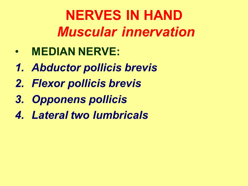 NERVES IN HAND Muscular innervation MEDIAN NERVE: 1.Abductor pollicis brevis 2.Flexor pollicis brevis 3.Opponens pollicis 4.Lateral two lumbricals