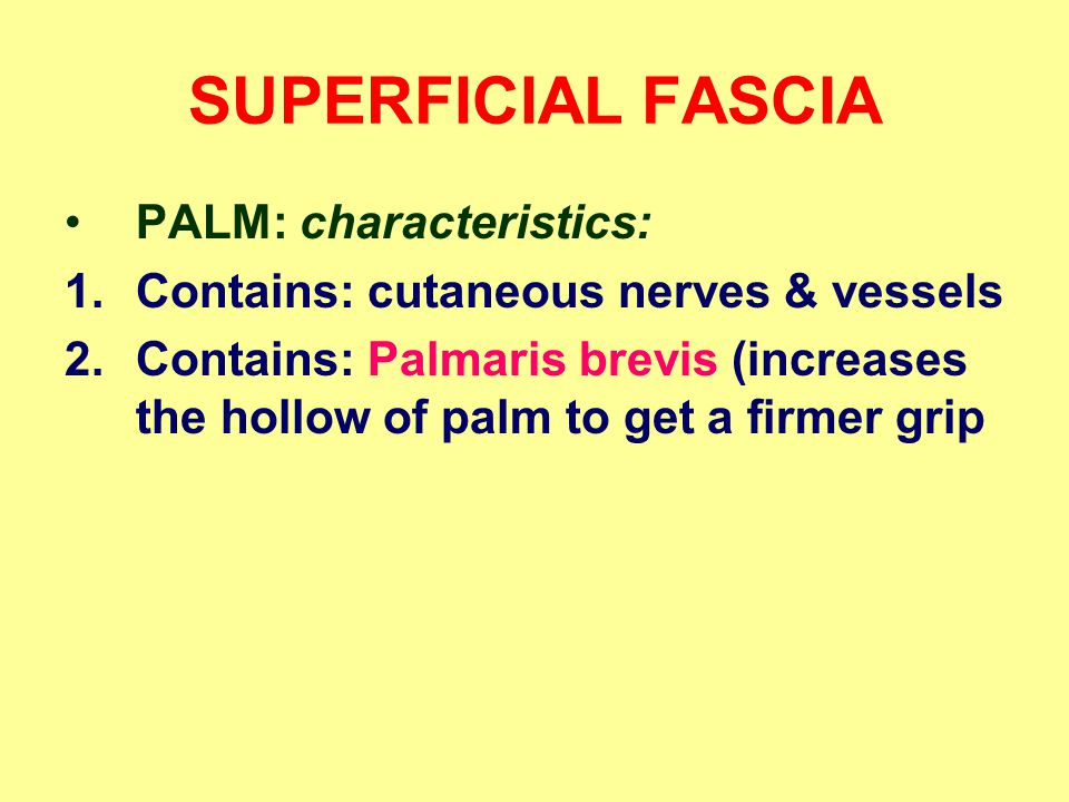 SUPERFICIAL FASCIA PALM: characteristics: 1.Contains: cutaneous nerves & vessels 2.Contains: Palmaris brevis (increases the hollow of palm to get a firmer grip