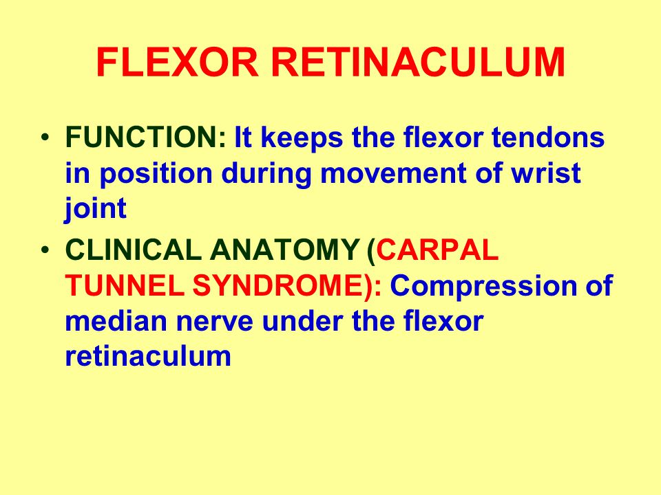 FLEXOR RETINACULUM FUNCTION: It keeps the flexor tendons in position during movement of wrist joint CLINICAL ANATOMY (CARPAL TUNNEL SYNDROME): Compression of median nerve under the flexor retinaculum
