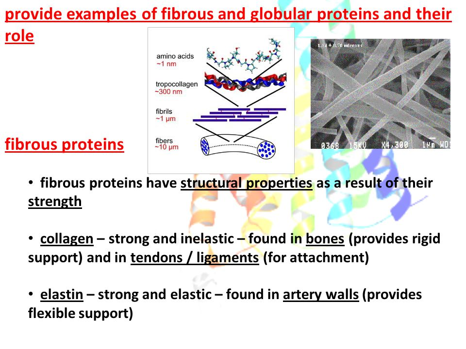 provide examples of fibrous and globular proteins and their role fibrous proteins fibrous proteins have structural properties as a result of their str