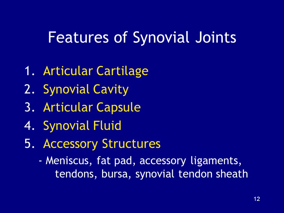 Features of Synovial Joints 1.Articular Cartilage 2.Synovial Cavity 3.Articular Capsule 4.Synovial Fluid 5.Accessory Structures - Meniscus, fat pad, accessory ligaments, tendons, bursa, synovial tendon sheath 12