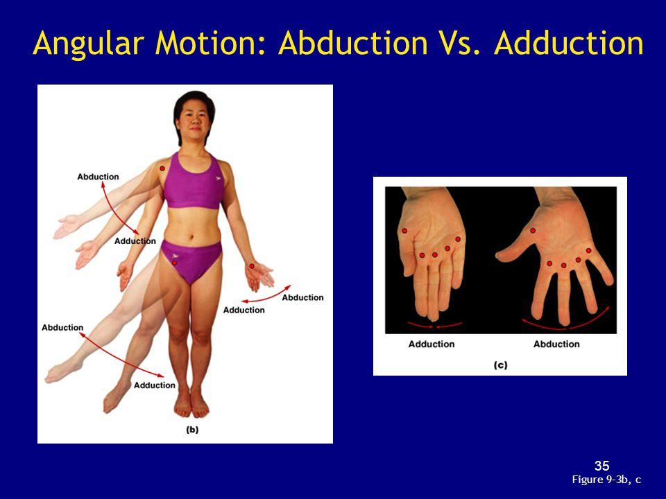 Angular Motion: Abduction Vs. Adduction Figure 9–3b, c 35