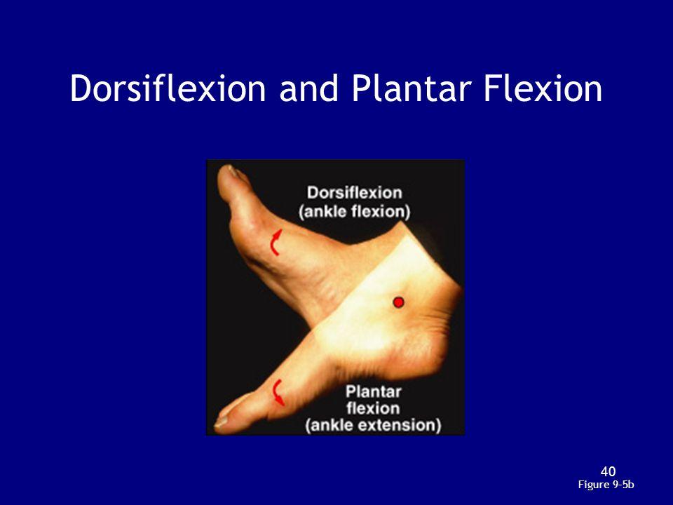 Dorsiflexion and Plantar Flexion Figure 9–5b 40