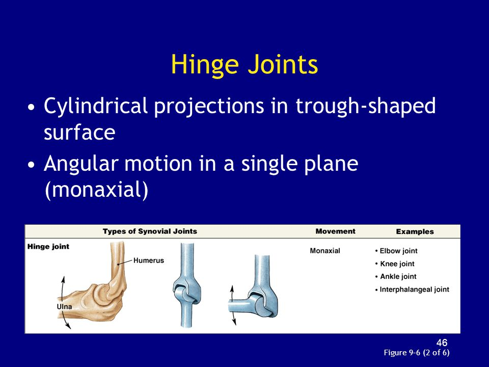 Hinge Joints Cylindrical projections in trough-shaped surface Angular motion in a single plane (monaxial) Figure 9–6 (2 of 6) 46
