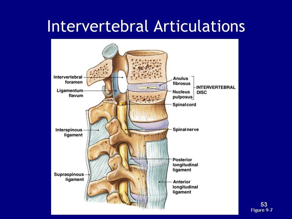 Intervertebral Articulations Figure 9–7 53