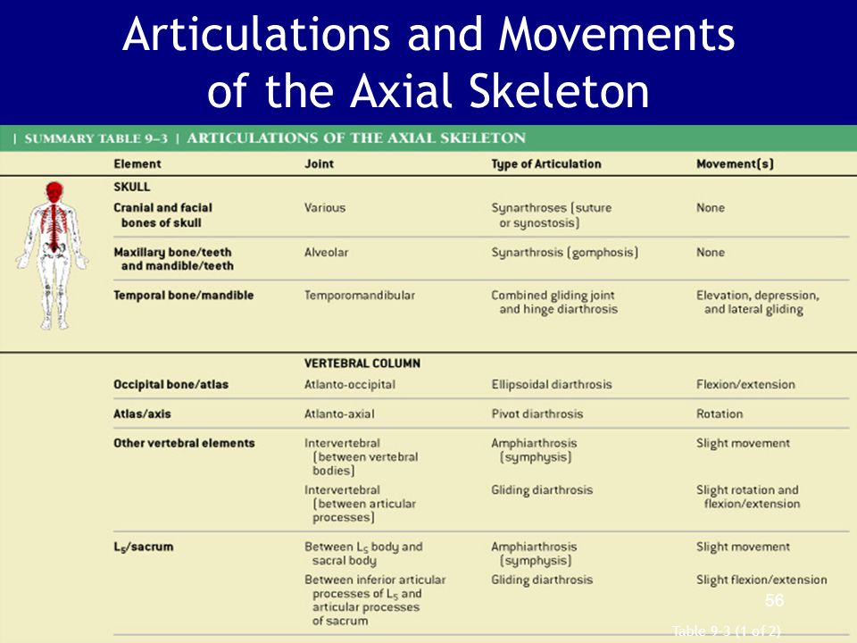 Articulations and Movements of the Axial Skeleton Table 9–3 (1 of 2) 56