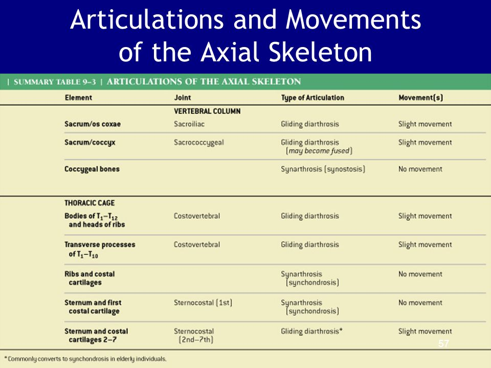 Articulations and Movements of the Axial Skeleton Table 9–3 (2 of 2) 57