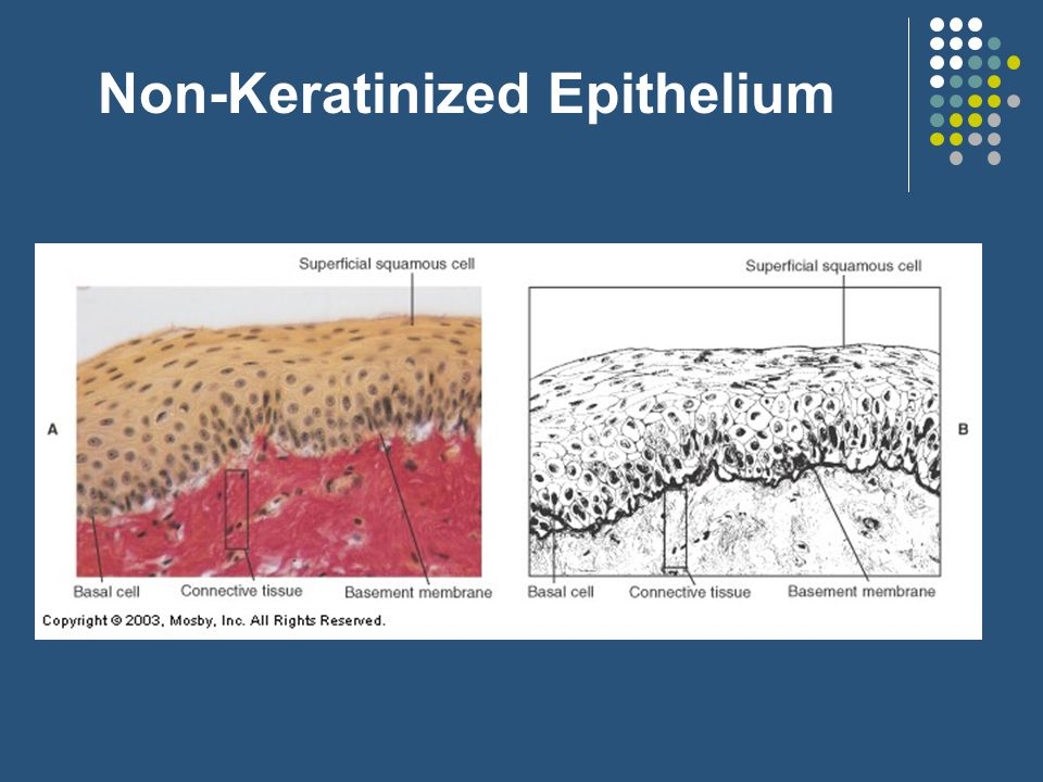 Non-Keratinized Epithelium