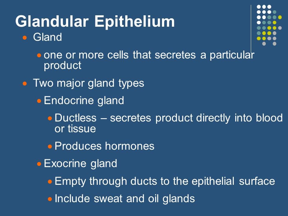 Glandular Epithelium  Gland  one or more cells that secretes a particular product  Two major gland types  Endocrine gland  Ductless – secretes product directly into blood or tissue  Produces hormones  Exocrine gland  Empty through ducts to the epithelial surface  Include sweat and oil glands