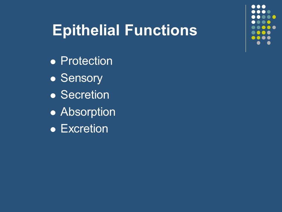 Epithelial Functions Protection Sensory Secretion Absorption Excretion
