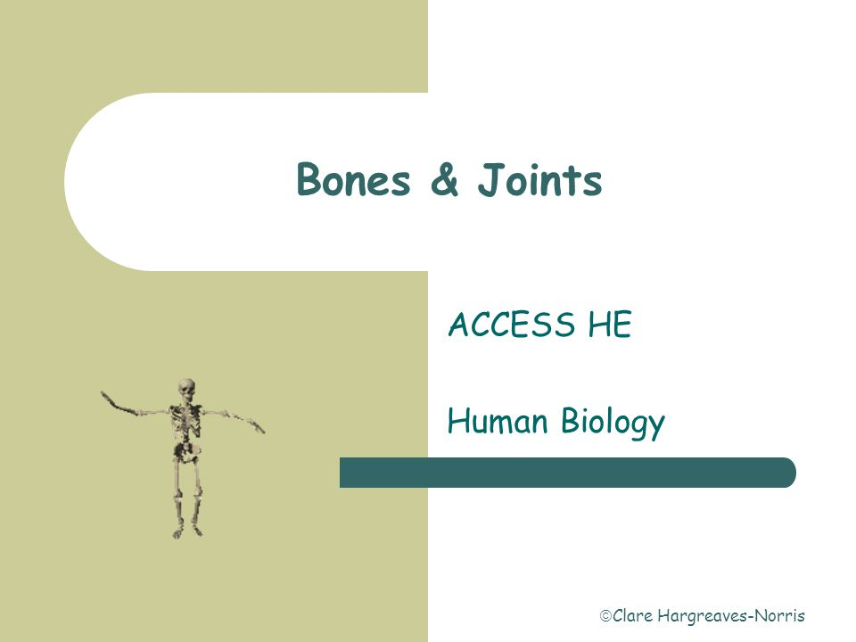  Clare Hargreaves-Norris Introduction  Bones are connected to each other by connective tissue.