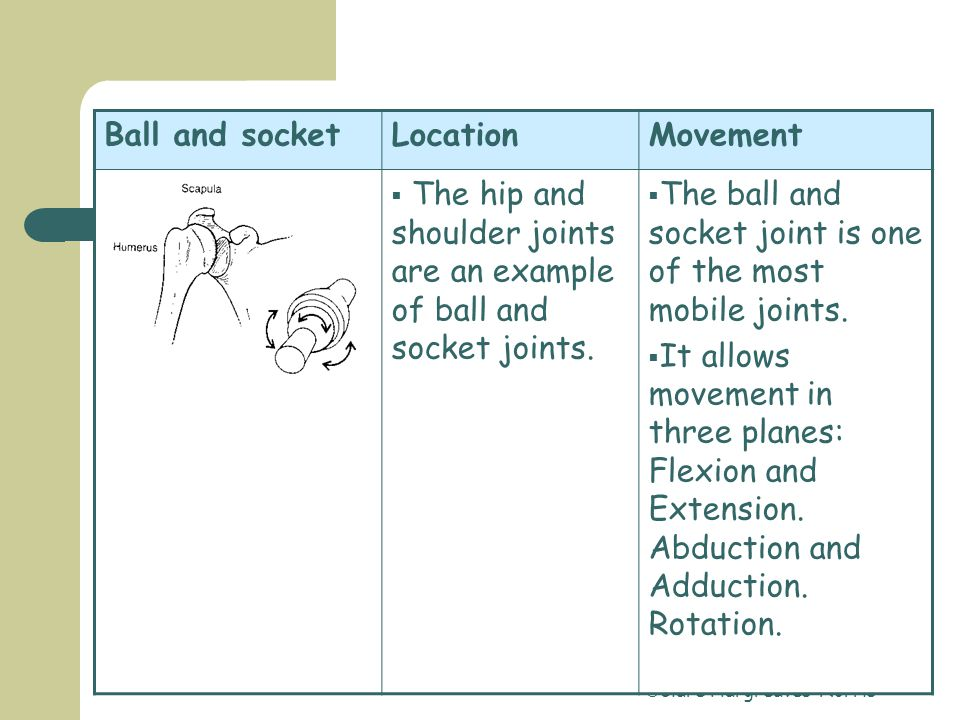  Clare Hargreaves-Norris Hinge jointLocationMovement  Examples of the hinge joint are the elbow and the joints of the phalanges in the foot and hand.