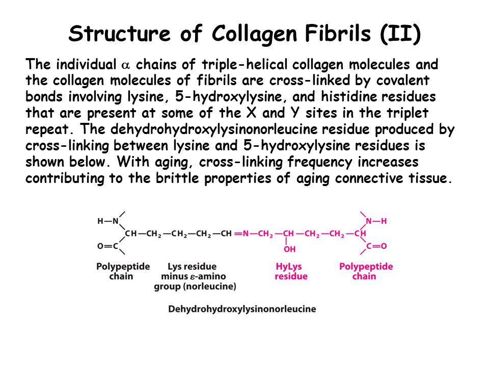 Structure of Collagen Fibrils (II) The individual  chains of triple-helical collagen molecules and the collagen molecules of fibrils are cross-linked