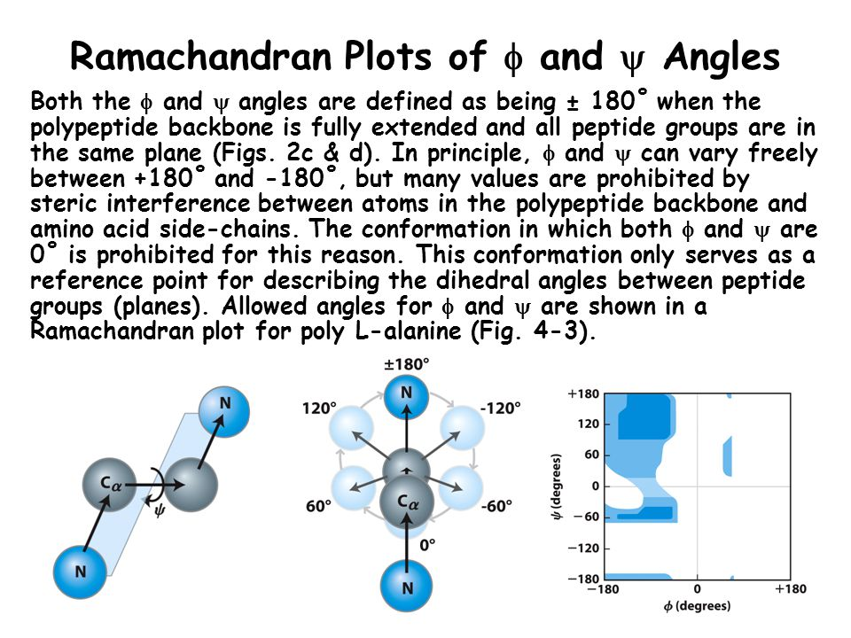 Ramachandran Plots of  and  Angles Both the  and  angles are defined as being ± 180˚ when the polypeptide backbone is fully extended and all pepti