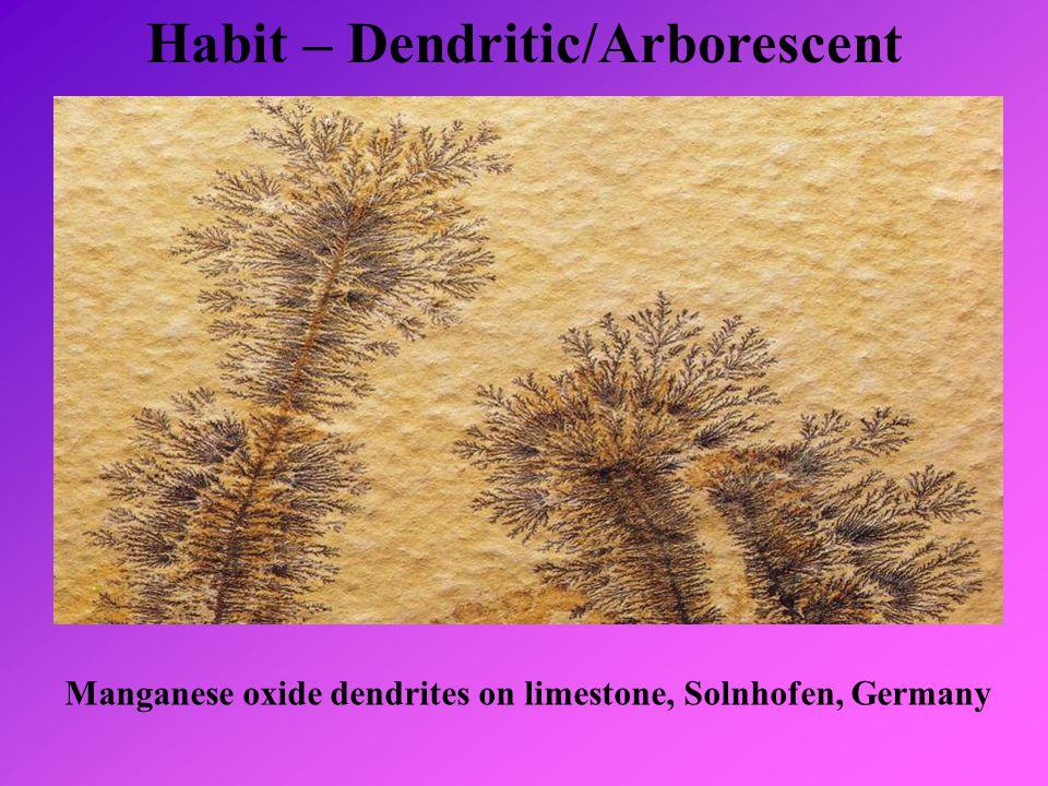Habit – Dendritic/Arborescent Manganese oxide dendrites on limestone, Solnhofen, Germany