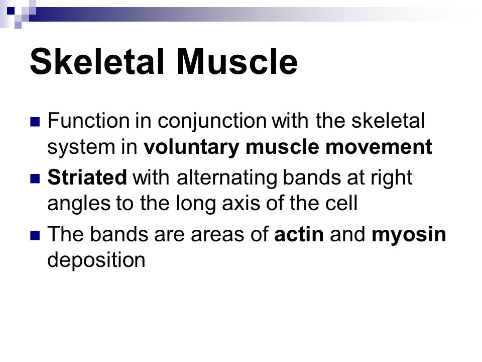 Skeletal Muscle Function in conjunction with the skeletal system in voluntary muscle movement Striated with alternating bands at right angles to the long axis of the cell The bands are areas of actin and myosin deposition