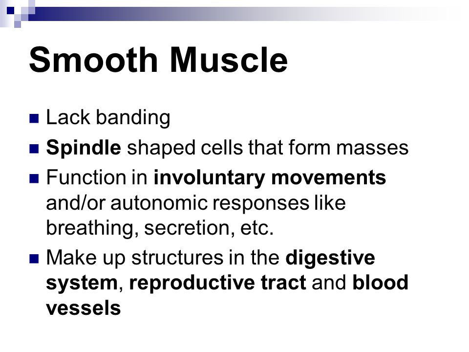 Smooth Muscle Lack banding Spindle shaped cells that form masses Function in involuntary movements and/or autonomic responses like breathing, secretio