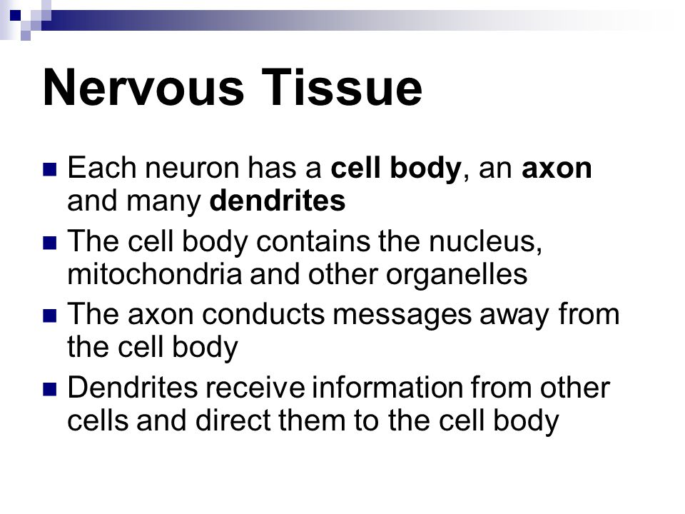 Nervous Tissue Each neuron has a cell body, an axon and many dendrites The cell body contains the nucleus, mitochondria and other organelles The axon conducts messages away from the cell body Dendrites receive information from other cells and direct them to the cell body
