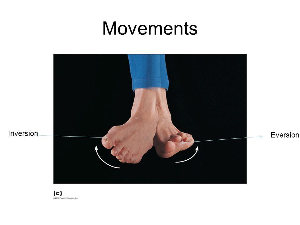Movements Inversion Eversion